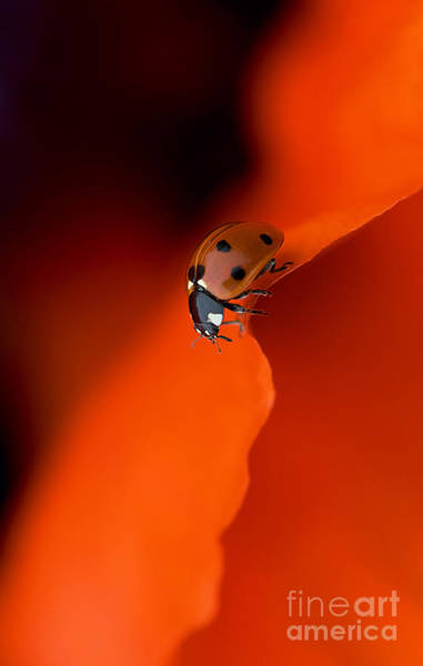 Ladybird Wall Art - Photograph - Lady In Red by Jacky Parker