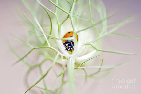 Ladybird Wall Art - Photograph - Lady Lovin by Jacky Parker
