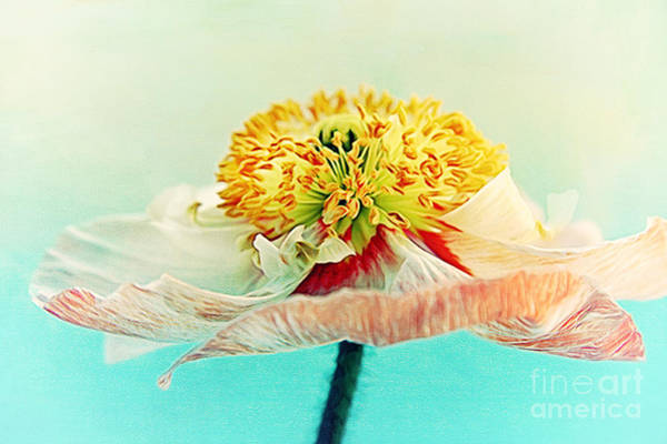 Digital Art - Lady Poppy 2 by Angela Doelling AD DESIGN Photo and PhotoArt