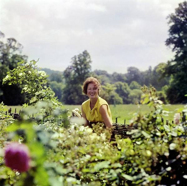 Western Society Photograph - Lady Renee Iliffe At Basildon Park by Henry Clarke