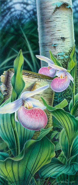 Wall Art - Painting - Lady Slipper by JQ Licensing