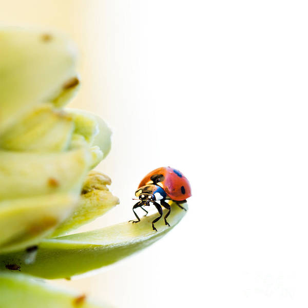 Ladybird Wall Art - Photograph - Ladybird On Desert Flower by Jane Rix