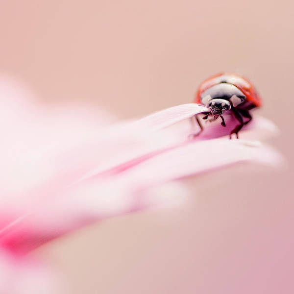 Ayrshire Photograph - Ladybird by Samantha Nicol Art Photography