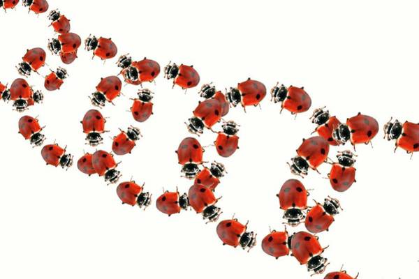 Wall Art - Photograph - Ladybirds by Gombert, Sigrid