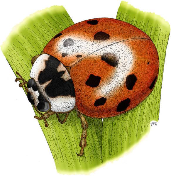 Wall Art - Photograph - Ladybug Beetle by Roger Hall