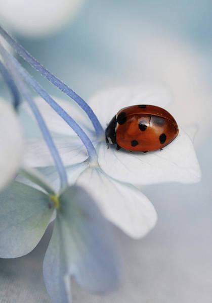 Wall Art - Photograph - Ladybug by Ellen Van Deelen