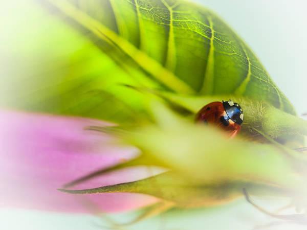 Ladybird Wall Art - Photograph - Ladybug IIi by Marco Oliveira