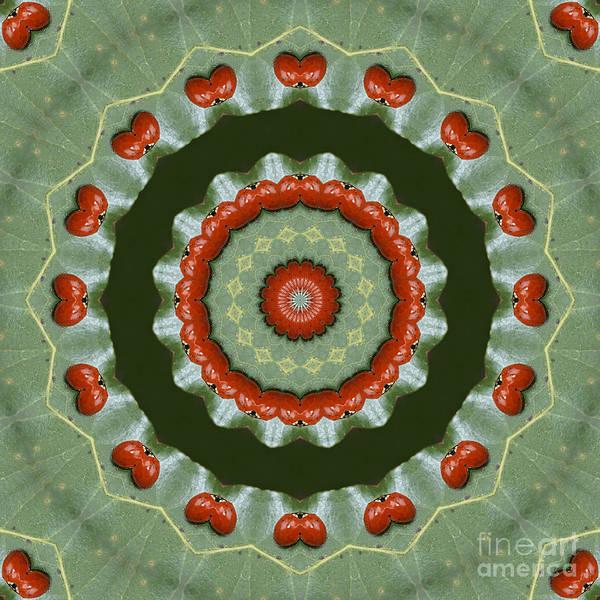 Photograph - Ladybug Kaleidoscope by MM Anderson