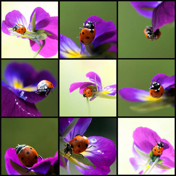 Interior Decorating Photograph - Ladybug On Parade by Lisa Knechtel