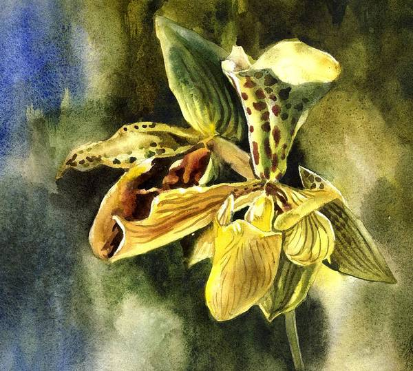 Painting - Ladyslipper Orchid Watercolor by Alfred Ng