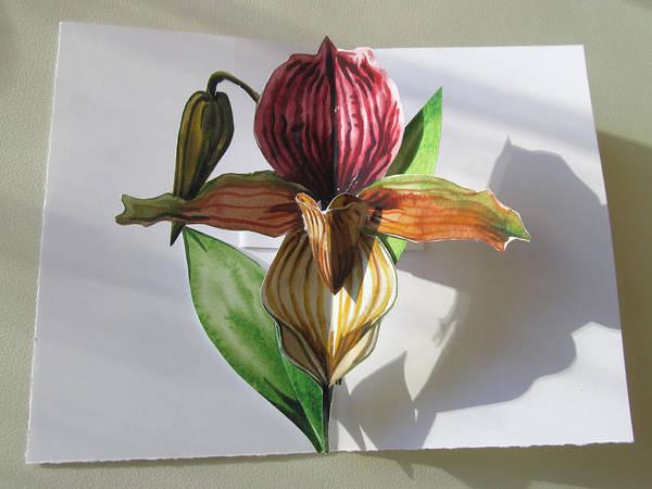 Ladyslipper Pop Up Card Art Print