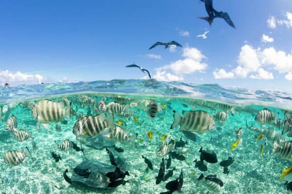Wall Art - Photograph - Lagoon Safari Trip Featuring Stingrays by Michele Benoy Westmorland
