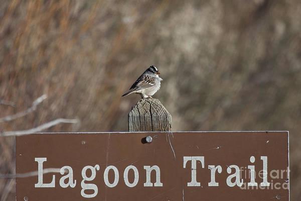 Notice Board Photograph - Lagoon Trail Gatekeeper by Douglas Barnard