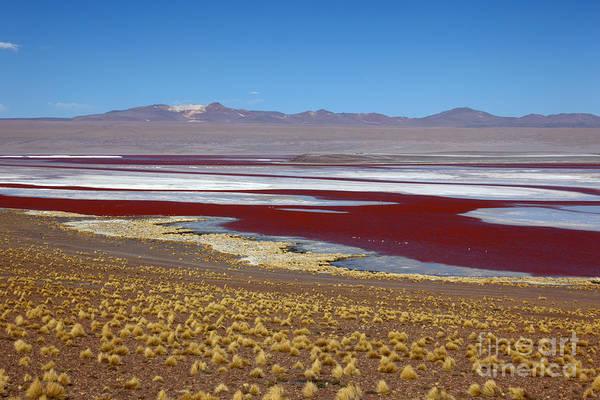 Photograph - Laguna Colorada Bolivia by James Brunker