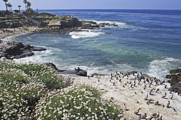 Photograph - Lajolla Calif Coast by Haiti Missions
