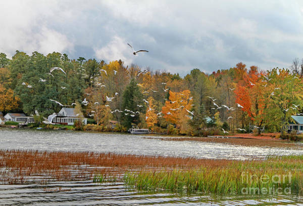 Photograph - Lake Carmi Autumn 2012 by Deborah Benoit
