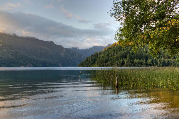 Wall Art - Photograph - Lake Crescent Morning  by Heidi Smith