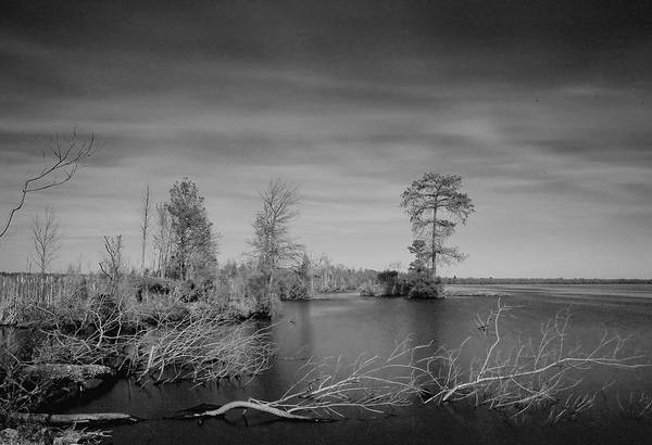 Photograph - Lake Drummond by Pete Federico