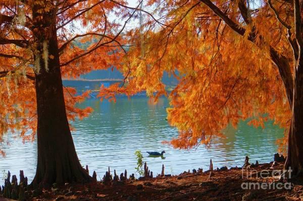 Photograph - Lake Ella Morning by Gail Kent