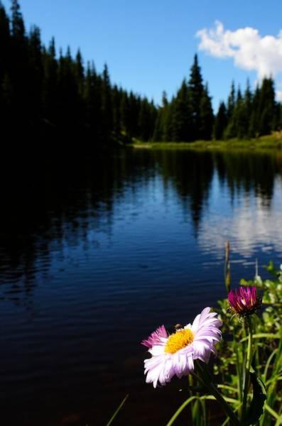 Photograph - Lake Irene by Walt Sterneman