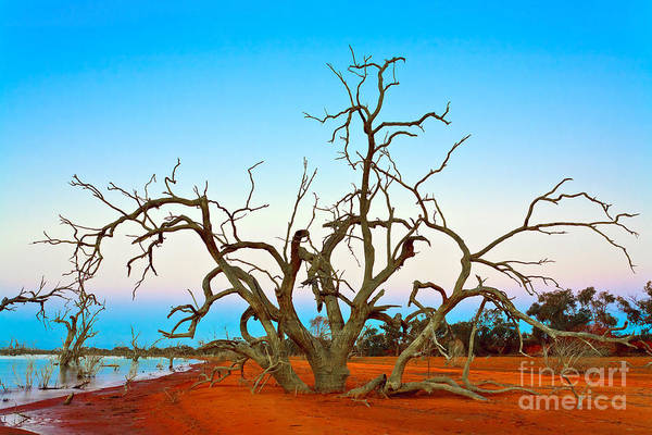 Wall Art - Photograph - Dusk On The Banks Of Lake Pamamaroo  by Bill  Robinson