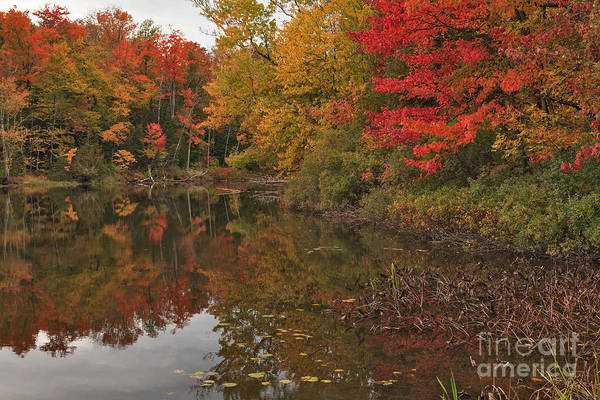 Photograph - Lake Salem Reflections by Charles Kozierok