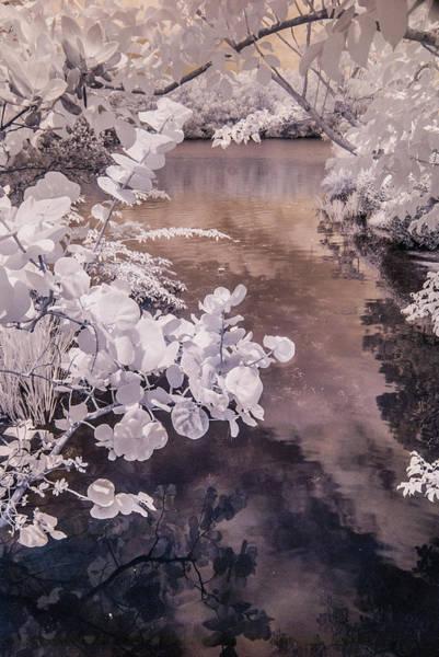 Lake Shadows Art Print