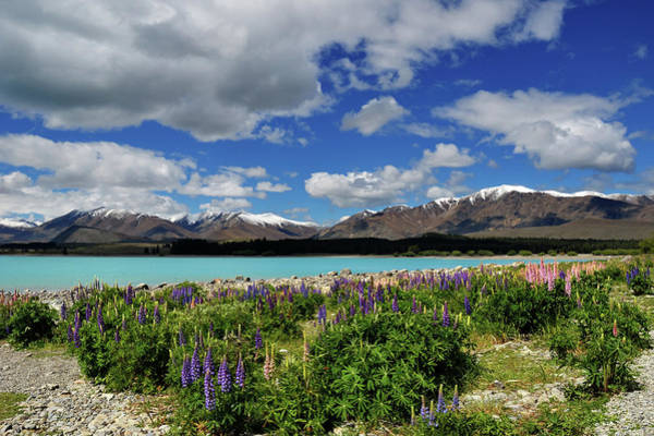 Lakes Region Photograph - Lake Tekapo by Graham Dean Photography
