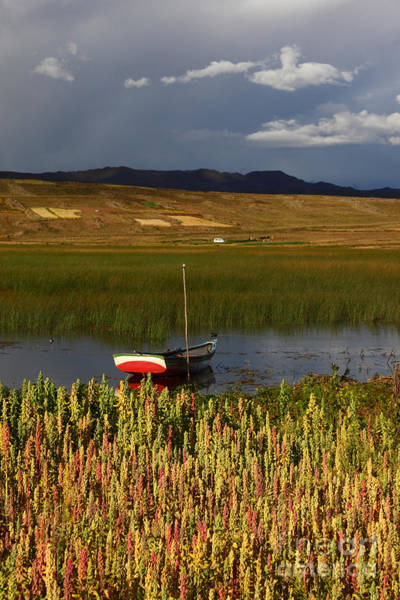 Photograph - Lake Titicaca And Quinoa Field by James Brunker