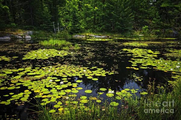 Wall Art - Photograph - Lake With Lily Pads by Elena Elisseeva