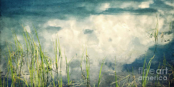 Blue Dragonfly Photograph - Lakeshore Reflections by Priska Wettstein