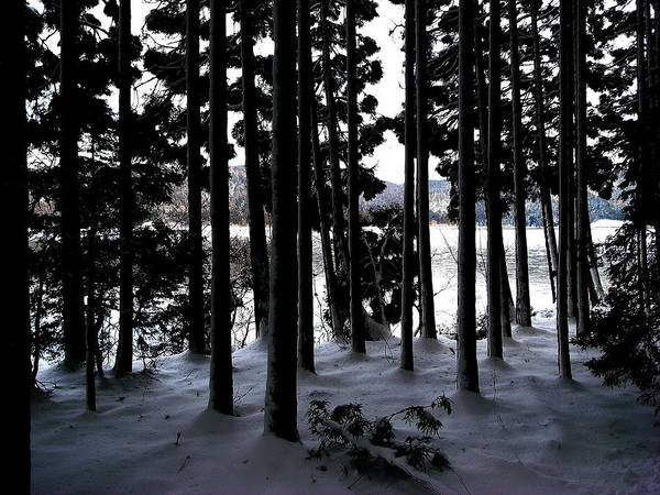 Cedar Tree Photograph - Lakeside Cedar Forest With Snow by Photographer, Loves Art, Lives In Kyoto
