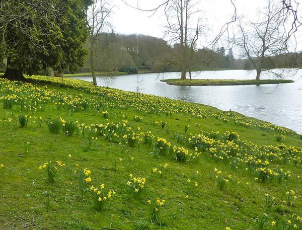 Stourhead Wall Art - Photograph - Lakeside Daffodils by Rob Sherwood