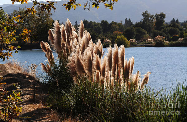Photograph - Lakeside In Early Autumn by Susan Wiedmann