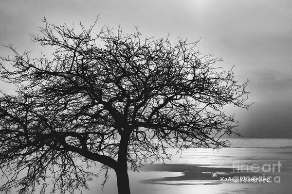 Grosse Pointe Farms Photograph - Lakeside Tree by Kathy Wesserling