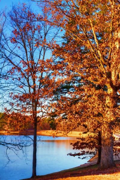 Photograph - Lakeside Trees by Barry Jones