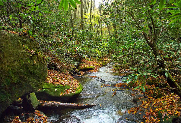 Photograph - Lamance Creek  by Duane McCullough