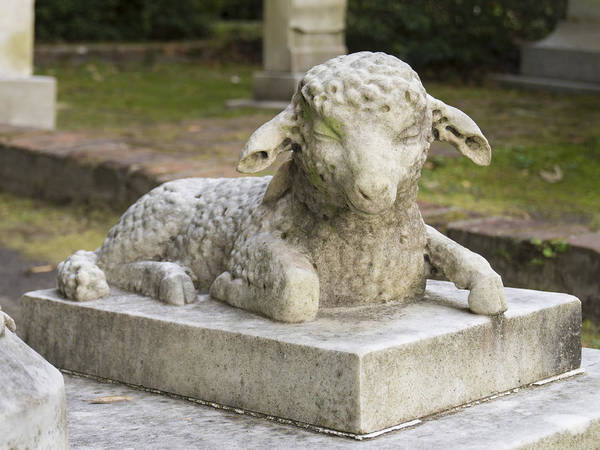 Photograph - Lamb Memorial In A South Carolina Cemetery by MM Anderson