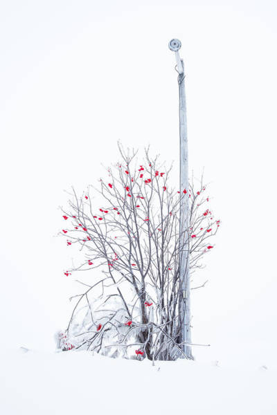 Canon Eos 6d Photograph - Lamp Post by Jakub Sisak