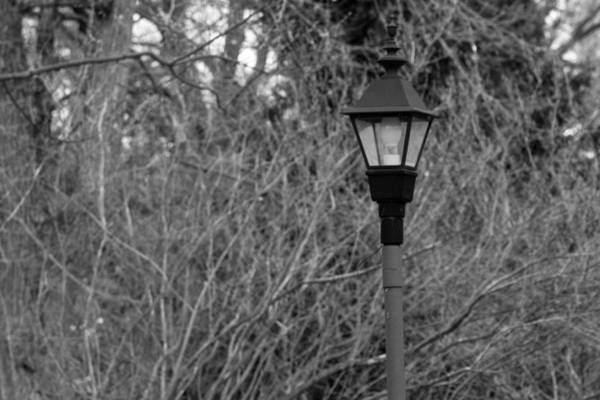 Photograph - Lamp Post by Keith Swango
