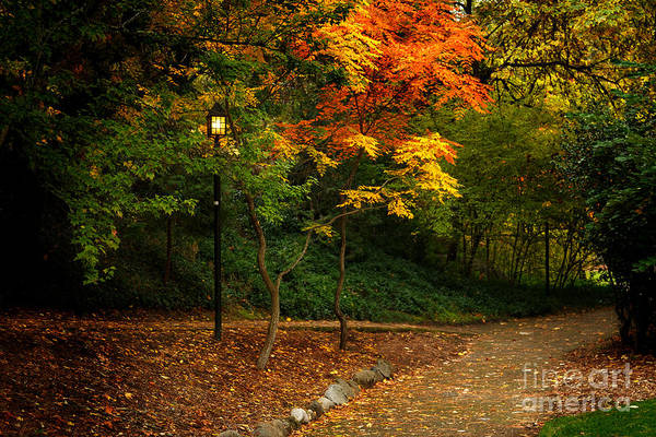 Wall Art - Photograph - Lamp Post On An Autumn Path by James Eddy