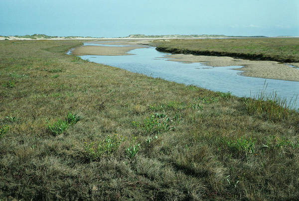 Coastal Marshes Photograph - Land Formation by Dr Jeremy Burgess/science Photo Library