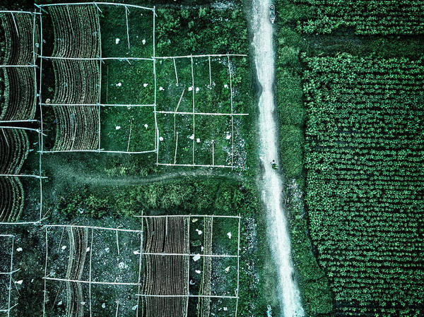 Growing Photograph - Land Of Idyllic Beauty by Zhou Chengzhou