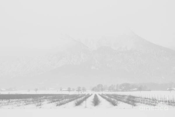 Photograph - Land Of Snow by Anita Kovacevic