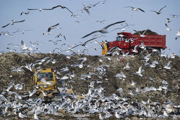 Dump Truck Photograph - Landfill by Eunice Harris