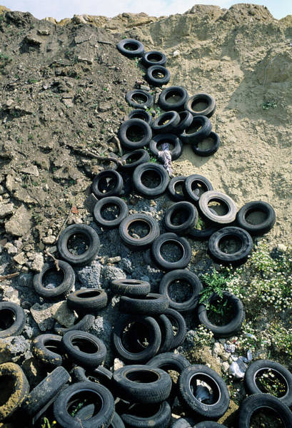 Tyre Wall Art - Photograph - Landfill by Robert Brook/science Photo Library