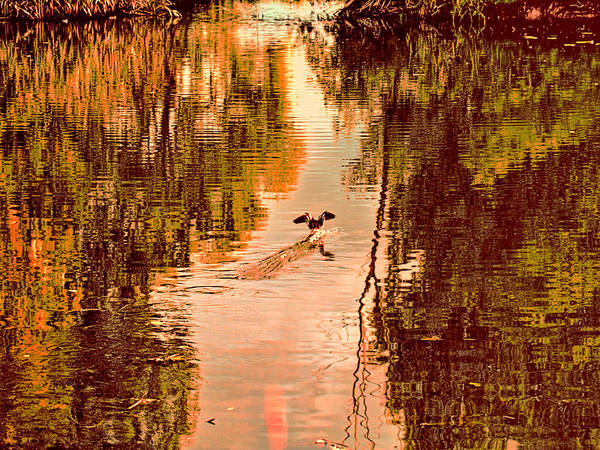Photograph - Landing Duck Absrtact by Leif Sohlman