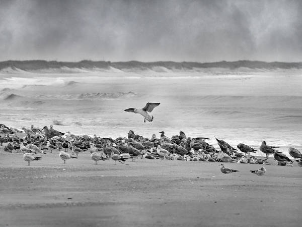 Wall Art - Photograph - Landing In A Blur by Betsy Knapp