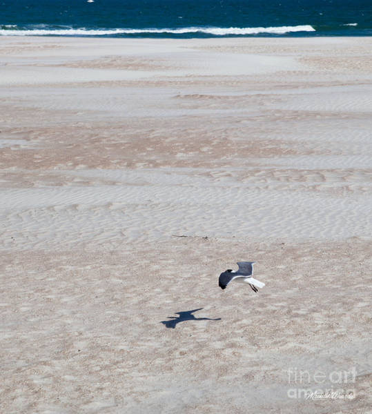 Photograph - Landing On The Beach by Michelle Constantine