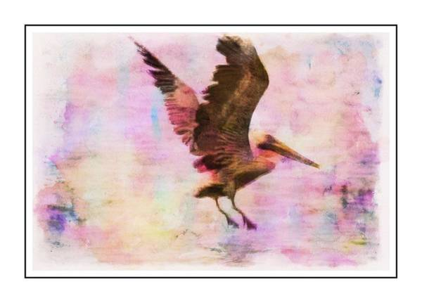 Photograph - Landing Pelican Colorwash by Alice Gipson